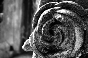 Friedhof--Rose-b
